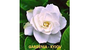 Zahradnictví a květinářství Gardenia - Ing. Miroslav Selucký, s.p.