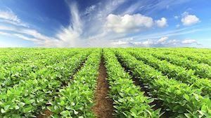 Zemědělské družstvo NOVA Dříteň - profilová fotografie