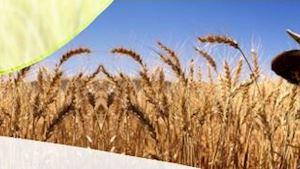Zemědělské a obchodní družstvo SLEZSKÁ DUBINA