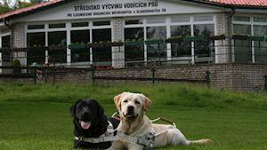 Středisko výcviku vodicích psů - SONS ČR