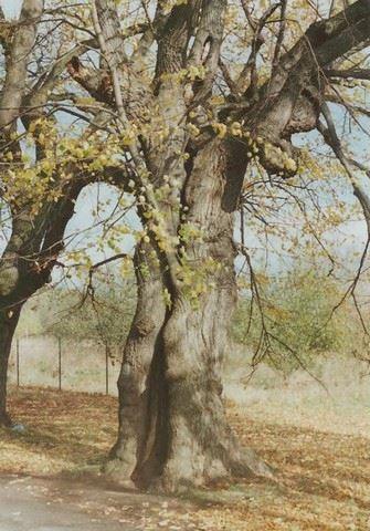 Arbosana - zahradní architektura - fotografie 11/15
