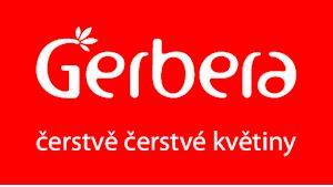 Gerbera - čerstvě čerstvé květiny - Karlín
