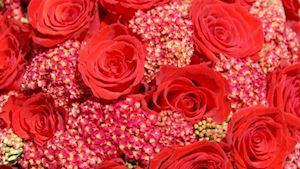 Květiny Eva Lojínová