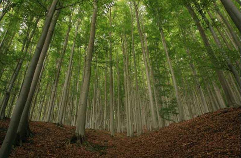 IFER - Ústav pro výzkum lesních ekosystémů, s.r.o. - fotografie 6/7