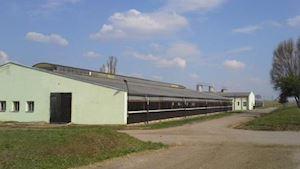 Zemědělská společnost DUBNÉ a.s.