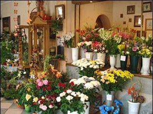CATTLEYA - velkoobchod květin a bytové dekorace - fotografie 7/19