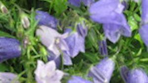 Zahradní centrum - Ing. Ladislav Molnár - profilová fotografie