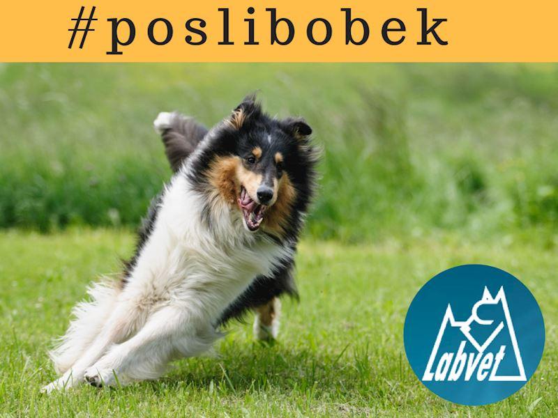 Labvet.cz, s.r.o. - veterinární klinická laboratoř - fotografie 5/6