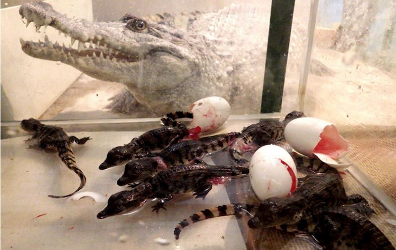 Krokodýlí zoo Protivín - fotografie 9/18